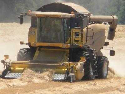 a combine harvesting grass seed